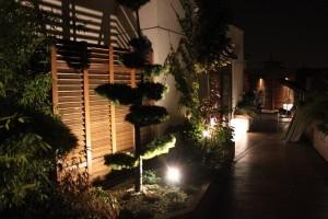 Oświetlenie LED ogrodu. Zaczarowany, tajemniczy ogród.