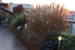 Trawy w ogrodzie. Oświetlenie tarasu