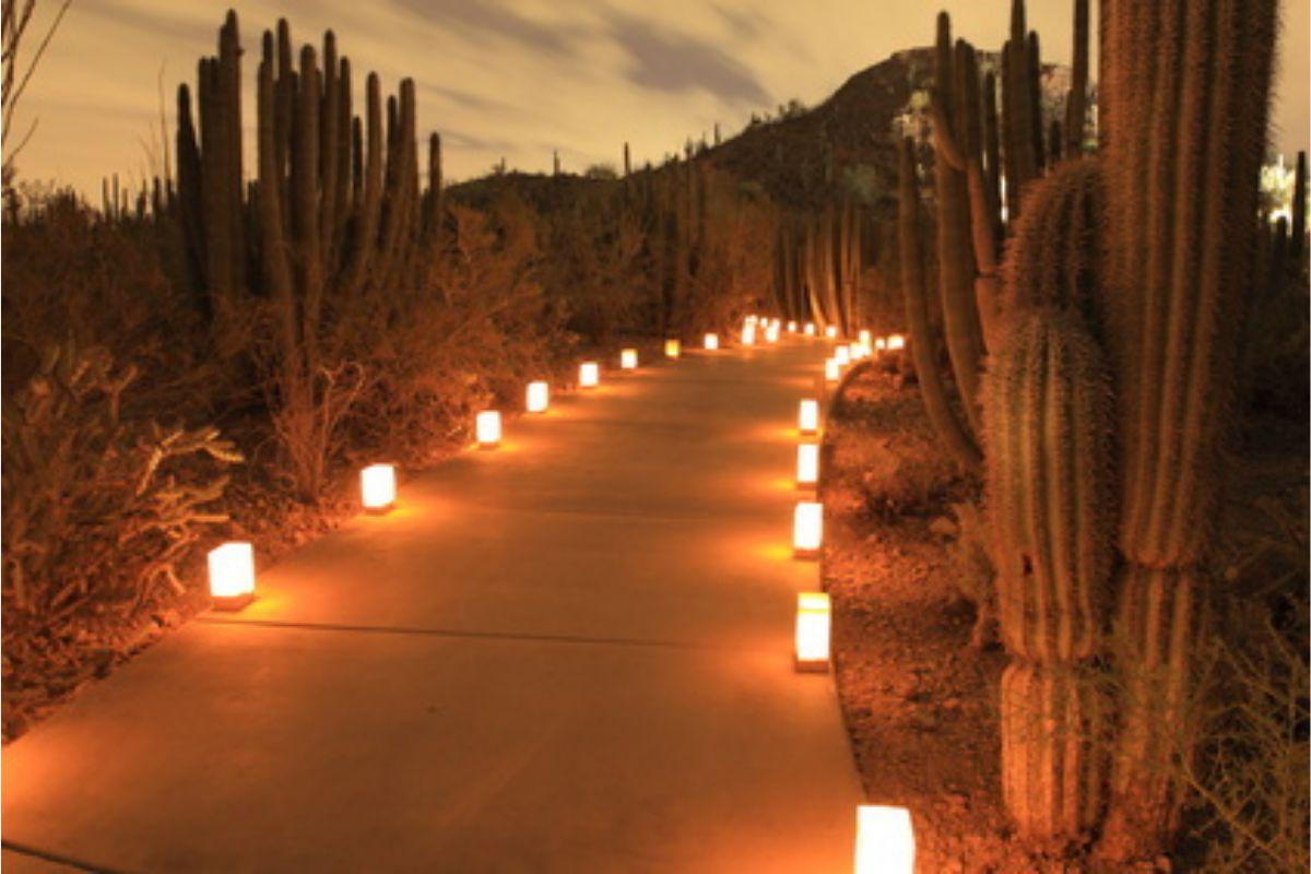 Oświetlenie LED ścieżki wśród kaktusów na meksykańskim wzgórzu